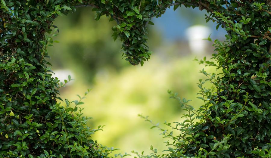 'Hoe word je een groene kerk?' Doe mee met webinar GroeneKerken op 21 oktober